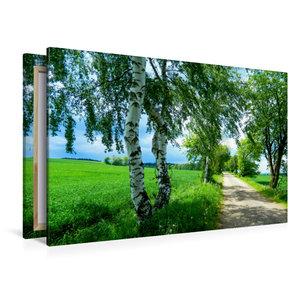 Premium Textil-Leinwand 120 cm x 80 cm quer Saftiges Grün