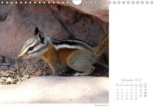 Hörnchen - neugierig, putzig, liebenswert