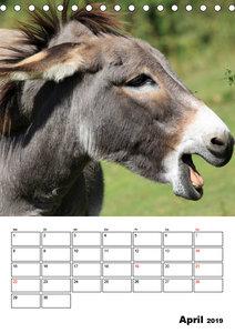 Süße Esel. Langohren zum Verlieben (Tischkalender 2019 DIN A5 ho