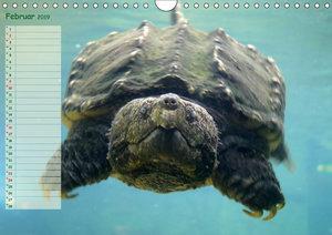 Schildkröten - Gepanzerte Wesen aus Urzeiten (Wandkalender 2019