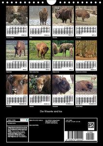 Die Wisente sind los (Wandkalender 2019 DIN A4 hoch)