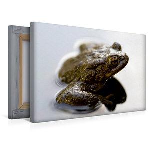 Premium Textil-Leinwand 45 cm x 30 cm quer Frosch
