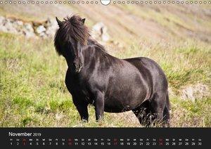 Islandpferde (Wandkalender 2019 DIN A3 quer)
