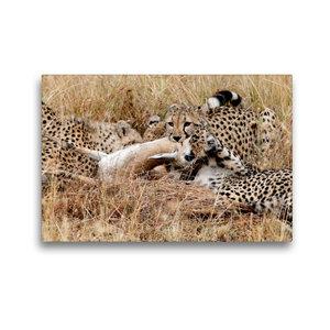 Premium Textil-Leinwand 45 cm x 30 cm quer Geparden mit Beute in