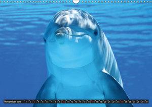Delfine - Lächelnde Intelligenz (Wandkalender 2019 DIN A3 quer)