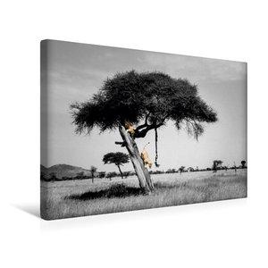 Premium Textil-Leinwand 45 cm x 30 cm quer Colorkey FineArt: Zwe