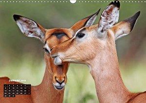 AFRIKA romantisch und voller Liebe