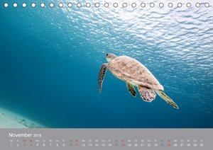 Meeresschildkröten der Karibik
