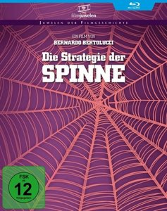 Die Strategie der Spinne