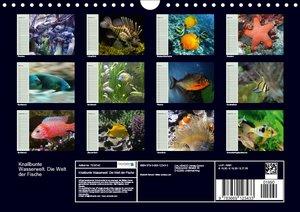 Knallbunte Wasserwelt. Die Welt der Fische
