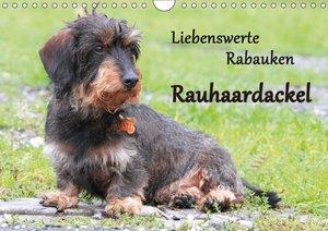 Liebenswerte Rabauken Rauhaardackel / CH-Version