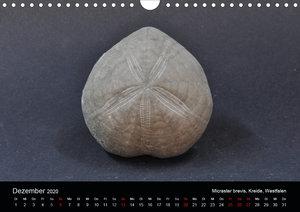 Fossilien - Zeugen der Urzeit