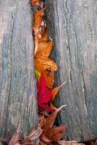 Premium Textil-Leinwand 80 cm x 120 cm hoch Laub auf der Holzbr