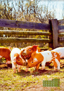 Tiere vom Bauernhof (Wandkalender 2019 DIN A2 hoch)