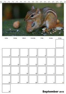 Streifenhörnchen - neugierige Nager (Tischkalender 2019 DIN A5 h