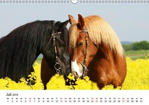 Pferde - im Galopp durch\'s Jahr 2019 (Wandkalender 2019 DIN A3