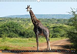 Wildes Südafrika (Wandkalender 2019 DIN A3 quer)