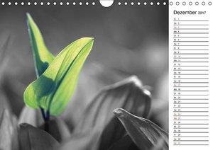 Schwarz-Weiß Malereien Terminkalender von Tanja Riedel für die S