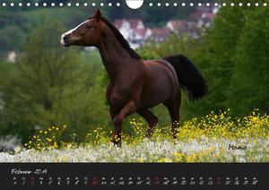 Pferde - wundervolle Gesch?pfe (Wandkalender 2019 DIN A4 quer)