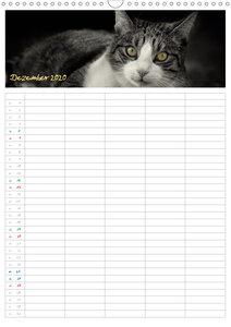 Miezekatzen Planungskalender