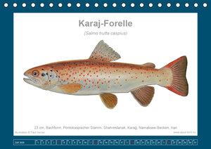 Fisch als Kunst 2020: Asiatische Forellen (Tischkalender 2020 DI
