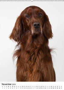 Hunde im Portrait (Wandkalender 2019 DIN A2 hoch)