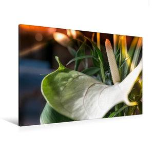 Premium Textil-Leinwand 120 cm x 80 cm quer Flamingoblume, weiß