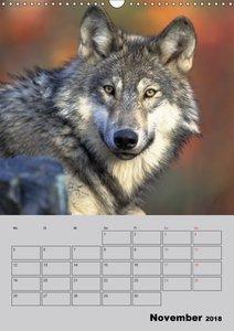 Wolf-Gesichter