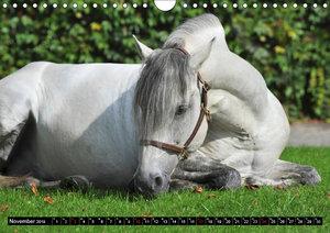 Traumpferde - Fürstliche Hofreitschule Bückeburg (Wandkalender 2