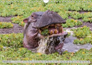 Emotionale Momente. Happy Hippo / CH-Version (Wandkalender 2019