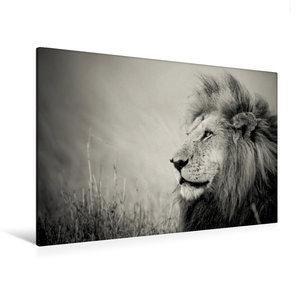 Premium Textil-Leinwand 120 cm x 80 cm quer The Lion King
