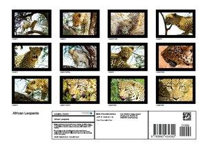 African Leopards (Poster Book DIN A4 Landscape)