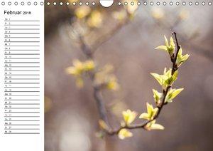 Details der Natur - Knospen und Blüten