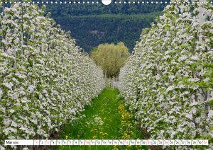 Bäume in Italien (Wandkalender 2020 DIN A3 quer)