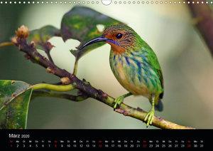 Vögel auf Trinidad und Tobago (Wandkalender 2020 DIN A3 quer)