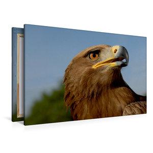 Premium Textil-Leinwand 120 cm x 80 cm quer Steinadler