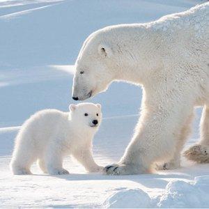 Eisbärenzeit
