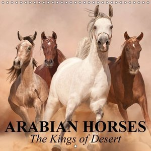Arabian Horses . The Kings of Desert (Wall Calendar 2015 300 × 3