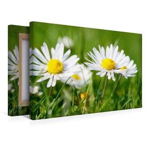 Premium Textil-Leinwand 45 cm x 30 cm quer Weiße Gänseblümchen