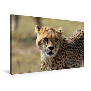 Premium Textil-Leinwand 75 cm x 50 cm quer Gepardin Malaika