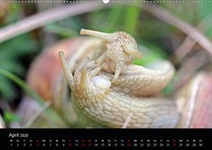 Der Schneckenkalender