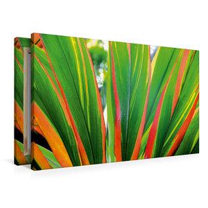 Premium Textil-Leinwand 90 cm x 60 cm quer Farbleuchten