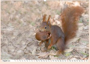 Eichhörnchen im Königlichen Garten