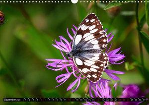 Bunte Pracht der Schmetterlinge (Wandkalender 2020 DIN A3 quer)