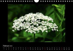 Faszination Pflanzenwelt - Unkraut, schön und wild