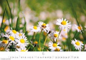 Blumenwiese S 2020