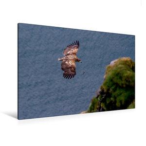 Premium Textil-Leinwand 120 cm x 80 cm quer Seeadler im Flug