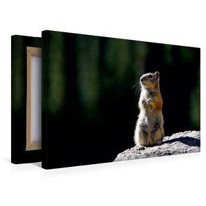 Premium Textil-Leinwand 45 cm x 30 cm quer Chipmunk