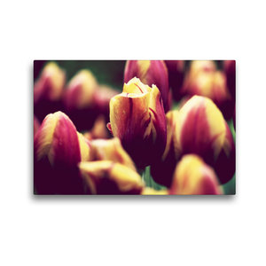 Premium Textil-Leinwand 45 cm x 30 cm quer Ein Bild aus dem Kale