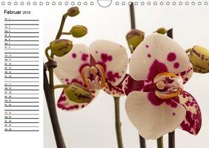 Blütenzauber Orchideen (Wandkalender 2019 DIN A4 quer)